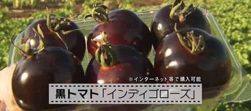 https://img.nanigoto.net/?u=2016/20160206_0950_06.jpg