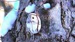 日中に飛ぶモモンガが珍しいという話:報道ステーション【2018/02/19】