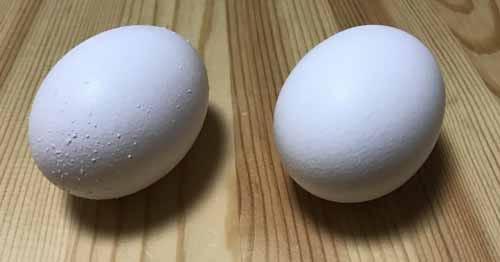 ブツブツのついた卵と普通の卵