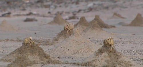 砂山とカニ