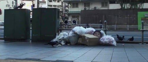 ゴミに集まるカラス