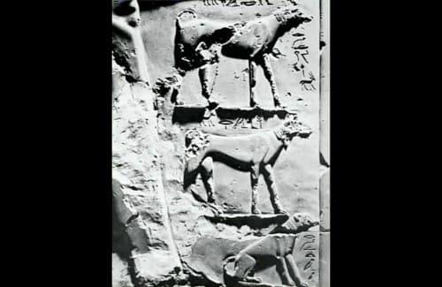 エジプトの壁画のサルーキ