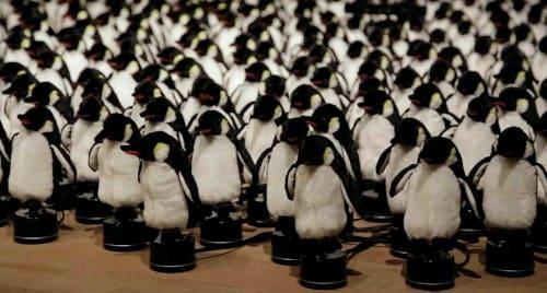 前を向くペンギンたち