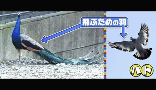 空を飛ぶ羽