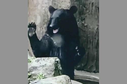 クマのツバサくん