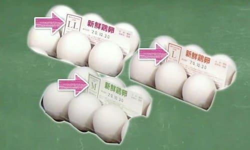 卵のサイズ