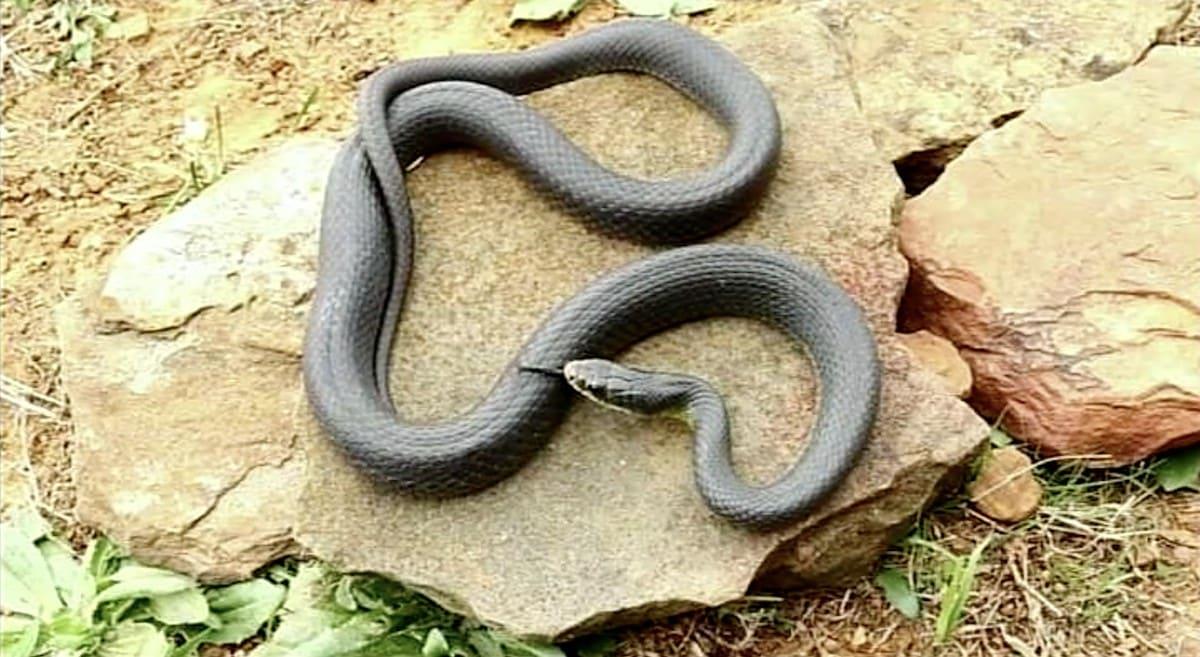 は 蛇 どこから 尻尾 の